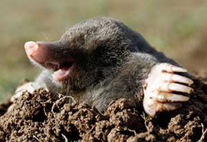 Животные роющие норы в земле. Животные под землёй