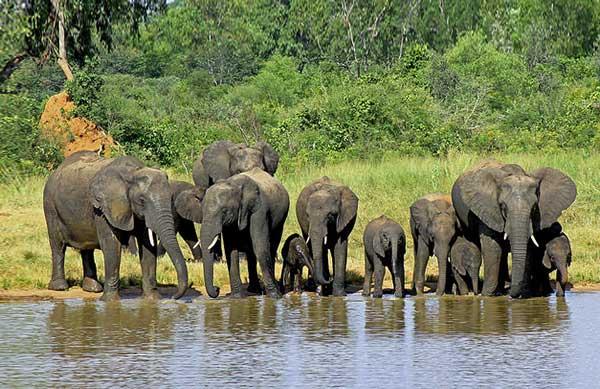 Реферат вода в жизни животных 2215